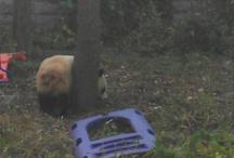 my trip to China 10/2012 / by Carissa Warren