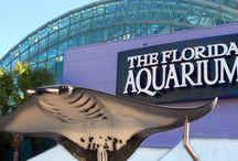 Voyager aux États-Unis : Floride / Tous les incontournables pour organiser votre voyage en Floride : bonnes adresses, idées de circuit, quoi voir et quoi faire