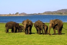 Beautiful Sri Lanka / Come experience the warmth of sandy beaches, sun kissed skin, smell of tea leaves, kick to your taste buds and eye appetising nature of beautiful Ceylon.....