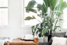 plants in a interior ||
