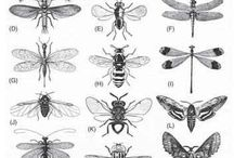 Insects