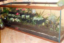 Gardening: indoor plants