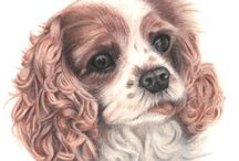Spaniel portraits / A selection of lifelike, high end pet portraits from the Tilly & Blue range