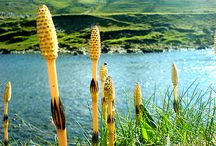 Zajímavé rostliny / http://www.rostliny-semena.cz/cz/nabidka-semena-tropicke-a-subtropicke-rostliny-osiva/