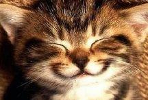 koty cats