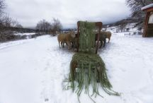 My String Chair / I have this old broken chair that's been in my barn since we bought the house.  This winter I decided to  cover it with the bailing twine from the bales of hay that we feed the animals.  It's an ongoing piece, on that will last until the last twine on the last hay bale is cut for the winter.