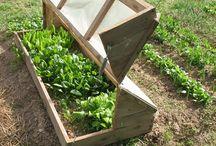 Gardening / by Ashley Lilly-Kendrick