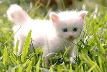tous se qui est adorable et mignion de leonnie / tous sur se qui est mignion dans la vie