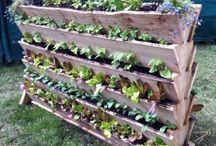 zahrada-zelenina a ovocie (garden vegetables and fruits)