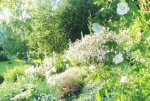 Versoja Vaahteramäeltä MY GARDEN / Garden, flowers, landscaping, garden from Finland, フィンランド庭, 北欧庭
