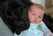 breed love ♥ newfoundland / #newfie #newfoundland