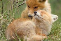 Cutest Animals Ever Omg