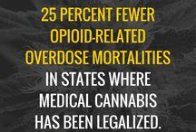 Medicinal cannabis study