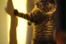 Kitties!*
