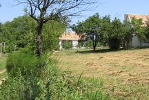 Wine house in Hungary / Vacation photo's of my fathers hometown and my little wine house (borház) (Please do not pin from this board, thank you)