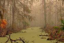 SCENE • Swamp