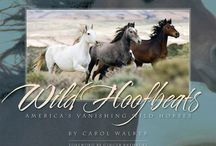 "Wild Hoofbeats: America's Vanishing Wild Horses by Carol Walker / An emblem of the American West and once numbering in the millions, the wild horse is considered by some today as a resource to be exploited or a pest to be eliminated. Now the wild horse is on the verge of being removed entirely from our nation's public lands. Wild Hoofbeats takes us deep into ""Adobe Town"" in Wyoming's Red Desert and one of the largest remaining wild herds in America. In passionate prose, but above all in stunning photographs that are both intimate and grand, Carol Walker convinces us to take the future of these elegant, exceptional animals to heart. Photographs and text by Carol Walker, forward by Ginger Kathrens. Published by Painted Hills Publishing.  160 pages soft cover large format full color book, including over two hundred of Carol's incredibly moving wild horse photos. This book has won 9 book awards. 10 percent of the proceeds go to The Cloud Foundation."