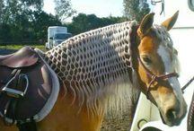 Прически для лошади