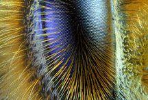 Méh szem