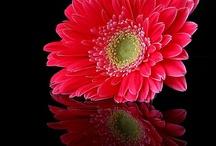 Flori pe fundal negru