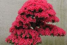 /bonsai/