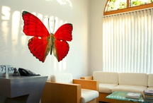 Butterfly Wallflower Collection / by Wallflower Online