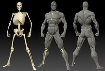 Anatomy / Body / Muscle