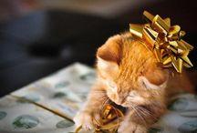 Gatitos / Lindas fotos de los mejores gatitos