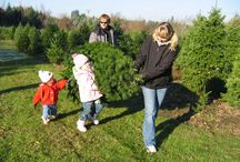 Holiday Tree Farms in the Tualatin Valley / After the last leaf has fallen, it's time to visit Washington County's Christmas tree farms. Breathe in the fresh air and cut your own tree, select a pre-cut tree or just join in on the holiday festivities.  From Douglas Firs to Noble Firs, these tree farms are your best bets for home-grown Oregon Christmas trees.