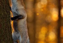 Foxy / by Meagh R