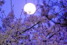 Lune printanière