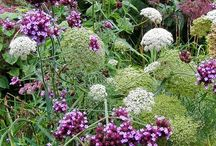 flower combinations (virág kombinációk)