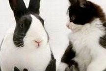 Hues: black & white