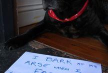 Dog Arse