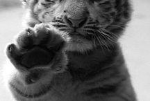 Animals BIG and small / by Carol Rajala