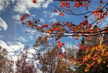 Sky Photography in Maine / Maine sky photography, seasonal color changes and cloud formations. Cherish the moments.