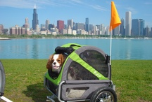 DoggyRide Across America / Check out our user submitted photos of owners and their dogs enjoying the outdoors across America with their DoggyRide dog trailers and strollers.