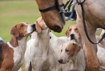 Love me some Foxhounds! / by Kelley Wullaert