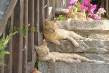 Без кота жизнь не та...