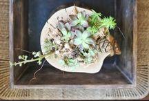 terrarium plant ideas