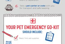Dog Safety / Everything you need to keep your pet safe
