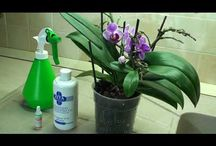 Секреты выращивания орхидеи