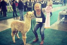 Alpacapalooza / We are proud to sponsor this incredible alpaca show each year! Enjoy these pictures from 2015, and beyond!
