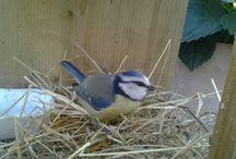 vogel /bird