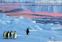 Venture to Antartica / Pack your snow shoes!  Antartica is the southernmost continent and site of the South Pole. It is a virtually uninhabited, ice-covered landmass reachable by cruise ship. Get ready for beautiful icebergs and lots of adorable penguins.