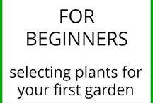 vegetables  gardening
