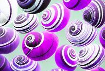 Beauty of Shells