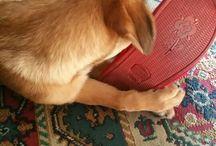 Lothar: il mio cane.