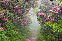 bosques magicos