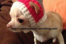 Louky  Tuque crochet